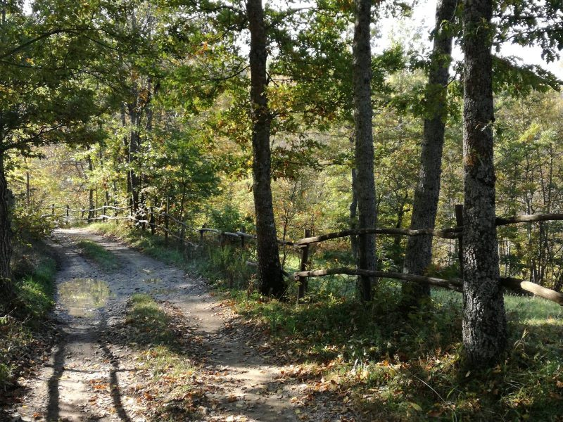 La via dei castagni e degli essiccatoi, escursione guidata organizzata dalla Cooperativa 100 Laghi - 2